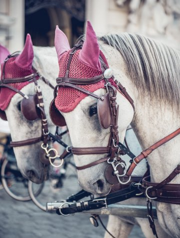 Two Lipizzaner horses in front of the Spanish Riding School.