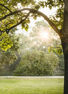 Der Wiener Stadtpark mit grünen Bäumen und Sträuchern im Sonnenschein.