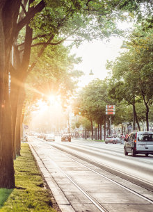 The trees of the Ringstraßen avenue in the morning at sunrise.